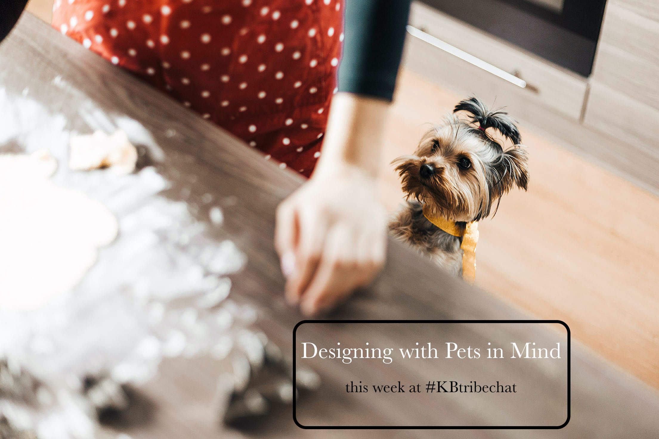 designing for dogs